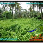 FOR SALE Beautiful PROPERTY 26,000 m2 LAND IN Sentral Ubud TJUB579