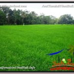 Exotic LAND FOR SALE IN UBUD TJUB581
