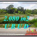 FOR SALE Affordable PROPERTY 2,080 m2 LAND IN UBUD BALI TJUB582