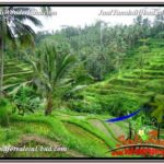 Exotic PROPERTY LAND IN UBUD FOR SALE TJUB590