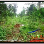 Magnificent PROPERTY LAND FOR SALE IN UBUD BALI TJUB591