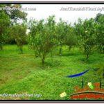 Beautiful PROPERTY LAND IN UBUD BALI FOR SALE TJUB593