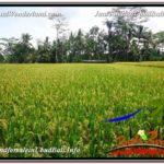 FOR SALE 3,500 m2 LAND IN UBUD TJUB596