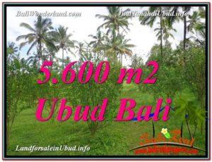 Magnificent PROPERTY UBUD LAND FOR SALE TJUB609