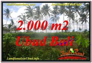 Exotic PROPERTY 2,000 m2 LAND FOR SALE IN Ubud Pejeng TJUB625