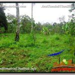 Beautiful 3,150 m2 LAND IN UBUD BALI FOR SALE TJUB608