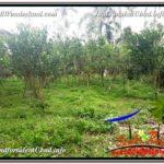 Affordable Ubud Tegalalang BALI LAND FOR SALE TJUB614