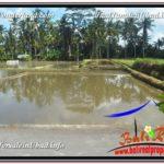 FOR SALE Magnificent 300 m2 LAND IN UBUD BALI TJUB619