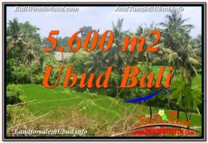 Beautiful UBUD BALI 5,600 m2 LAND FOR SALE TJUB636