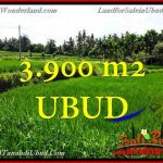 Affordable PROPERTY 3,900 m2 LAND FOR SALE IN UBUD BALI TJUB658