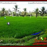 FOR SALE Magnificent PROPERTY LAND IN Ubud Pejeng BALI TJUB656