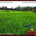 FOR SALE Magnificent PROPERTY 3,900 m2 LAND IN UBUD BALI TJUB658