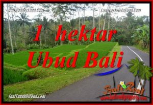 10,000 m2 Land in Ubud Bali for sale TJUB683