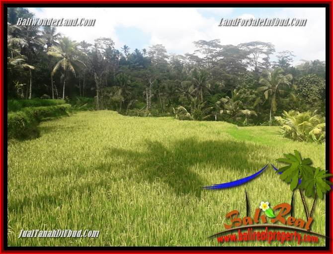 Magnificent Property Land for sale in Ubud Bali TJUB690