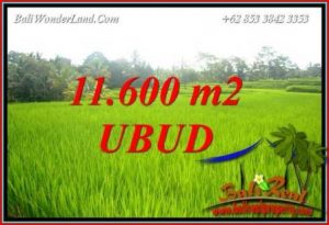Beautiful 11,600 m2 Land for sale in Ubud Tegalalang TJUB732